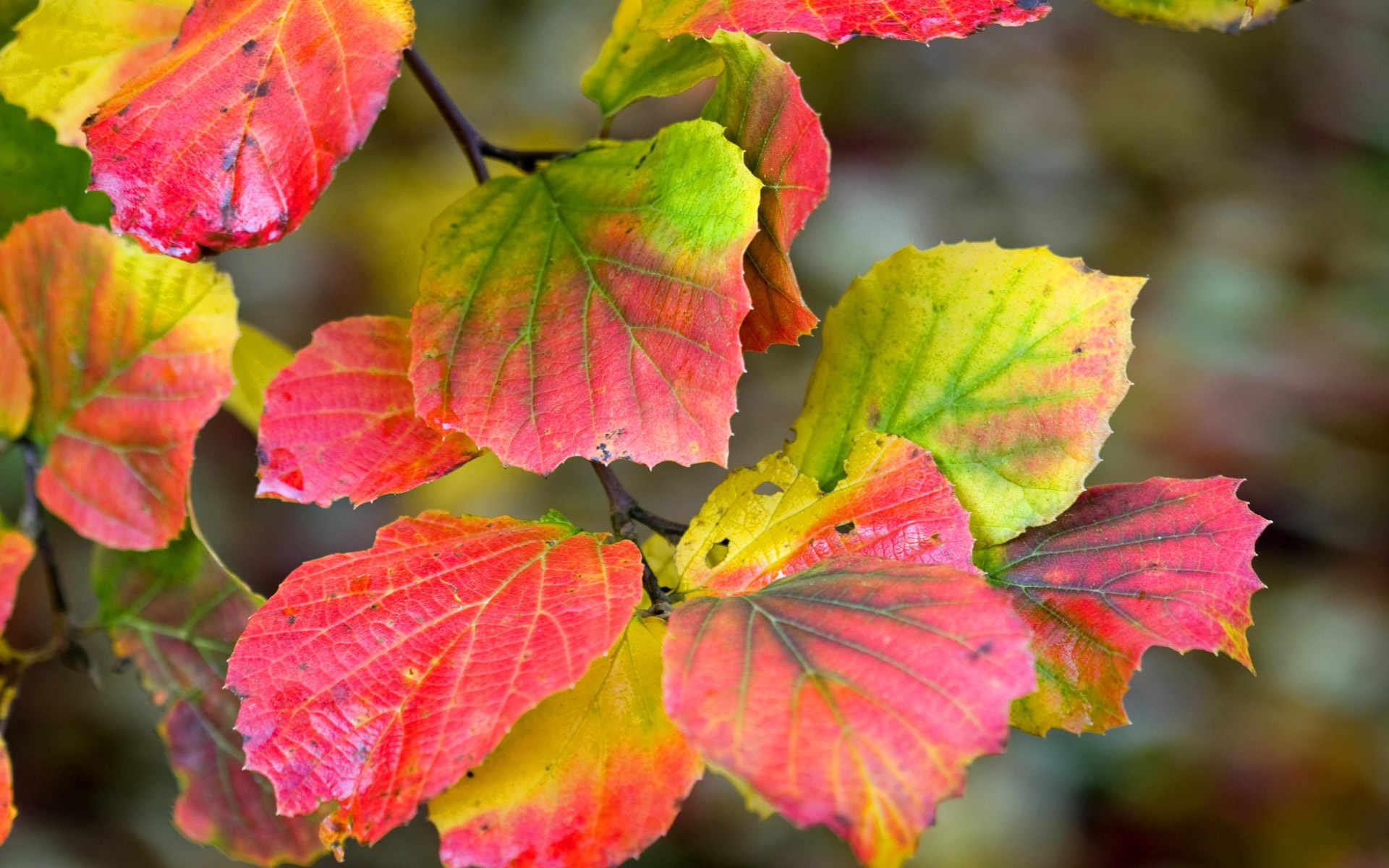 Njut av underbara hösten med en promenad i Kronoskogen
