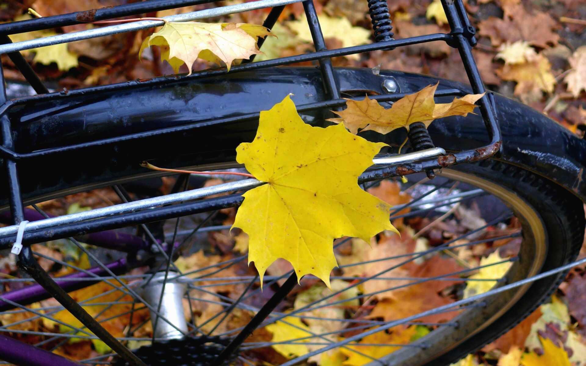 Färgglada hösten är här - upptäck Nordvästra Skåne på cykel