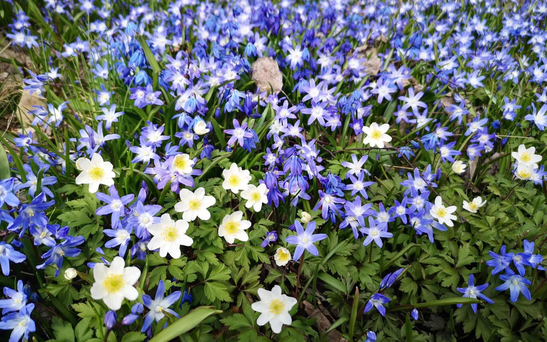 Våren väcker liv på nytt...